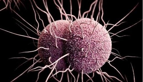 Gonorrhea, Chlamydia, and Syphilis